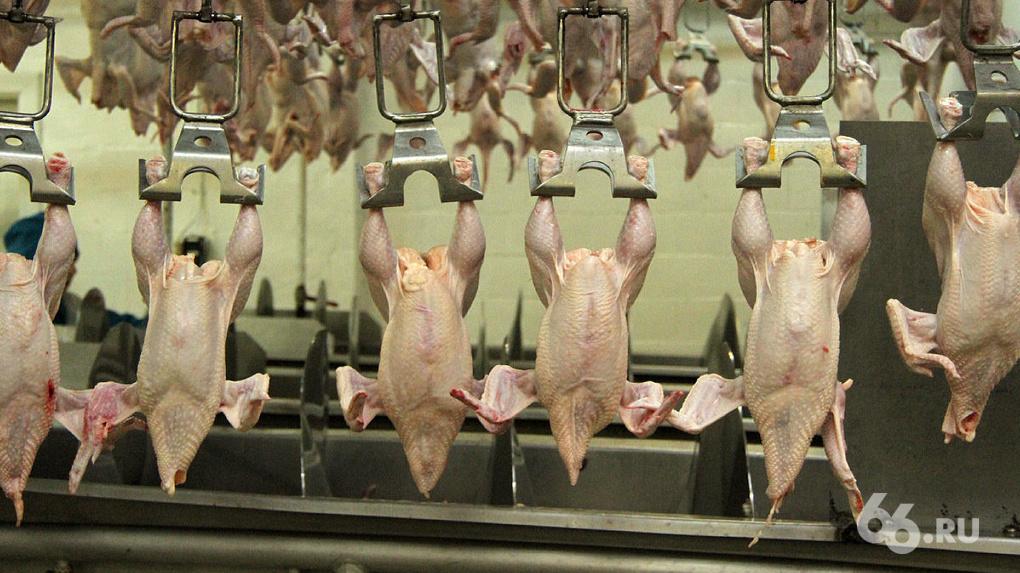 Губернатор попросил перенести птицефабрику, чтобы избавить Среднеуральск от запаха. Учредитель против