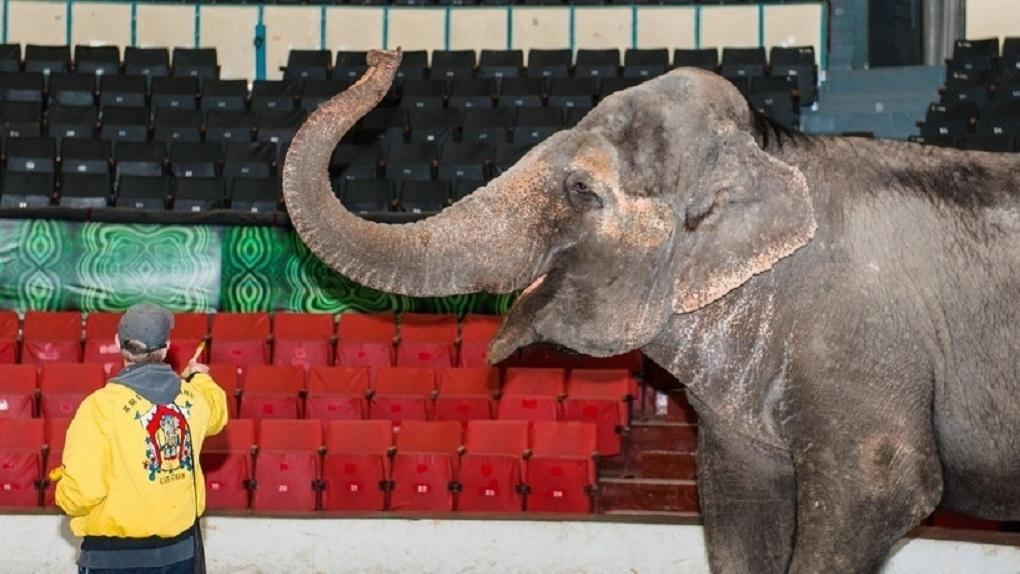 В Перми застряли слоны из Варшавы. Пандемия превратила их в нелегальных трудовых мигрантов
