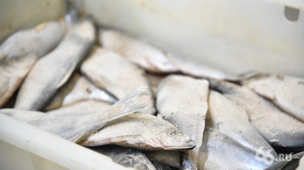 Спикер гордумы Игорь Володин нарушил карантин, взял мотыля и пошел на рыбалку. Фото