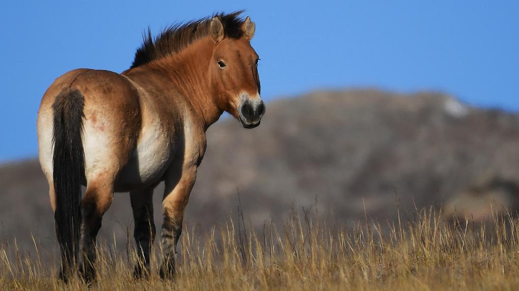 В России признали «вероятно исчезнувшими» 11 видов животных. Фото