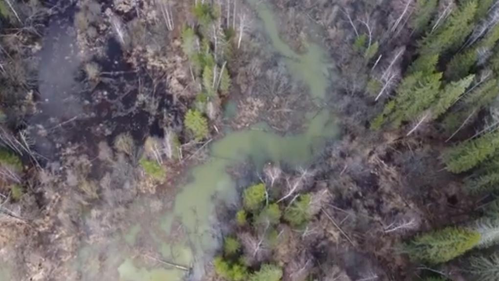 Река на севере области превратилась в грязно-зеленый поток. Апокалиптичное видео