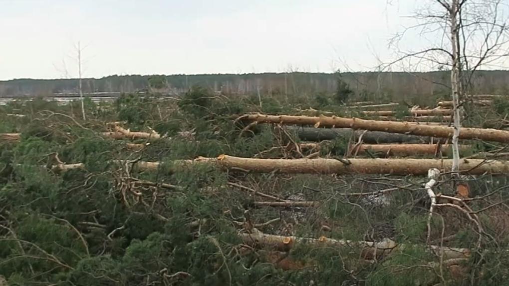 Застройщик логоцентра «Уральский» без разрешения на строительство вырубил сотни деревьев возле Шарташа