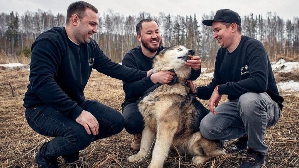 Уральские шеф-повара устроят ужин помощи приюту хаски, пережившему эпидемию