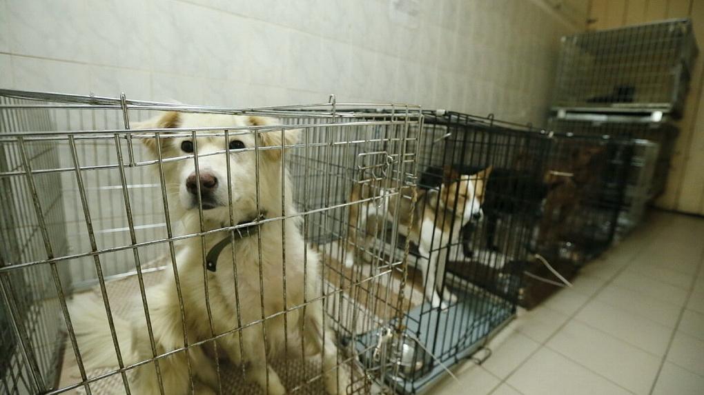 В Свердловской области построят шесть приютов для бездомных животных