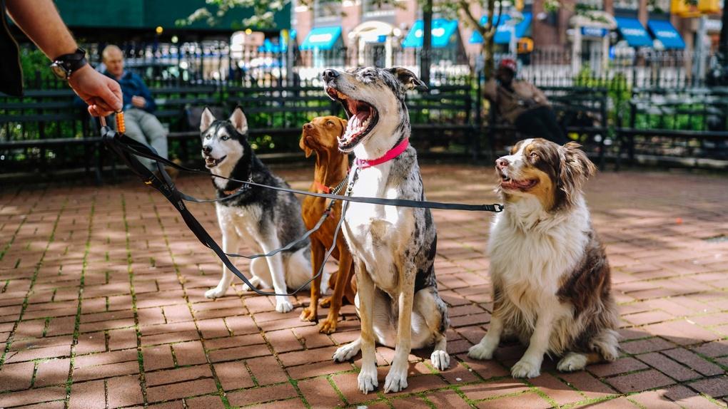 Спрос на собак в Екатеринбурге в два раза превысил спрос на кошек. Самые популярные породы