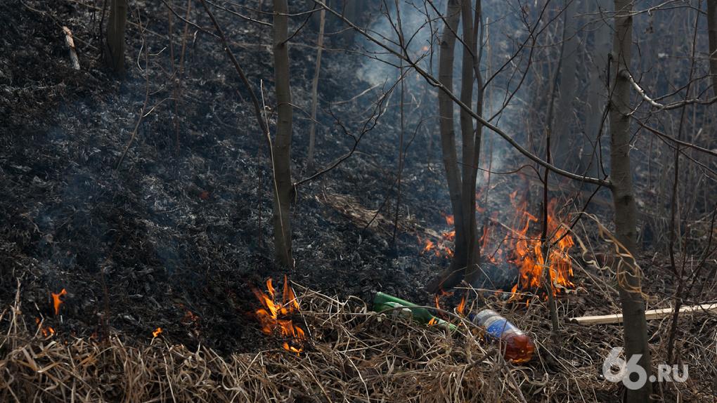 Виновников крупных природных пожаров будут очень жестко наказывать. Заявление главы МЧС