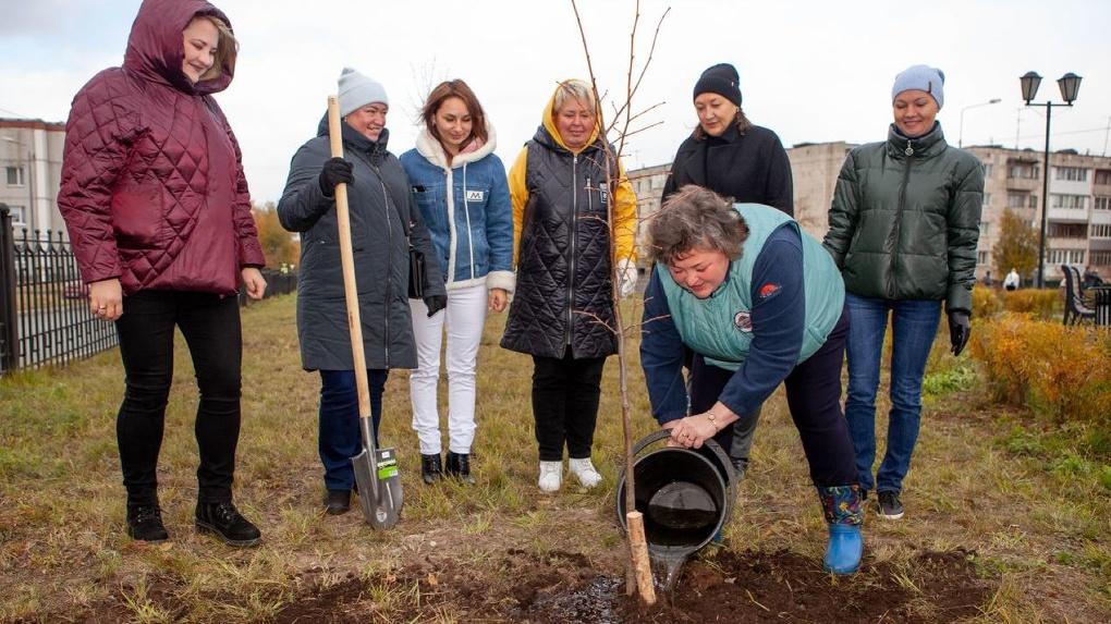 Ивы, липы, яблони, рябины. ЕВРАЗ высадит в уральских городах 550 деревьев
