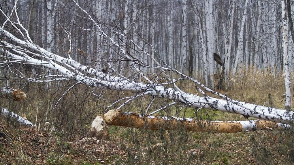 В Свердловской области официально запретили посещать леса. Совсем