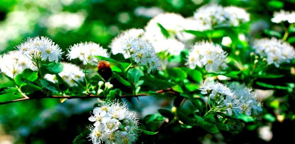 Ботанический сад в Екатеринбурге признают национальным достоянием