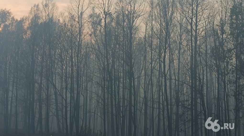 Пациентов ковидного госпиталя эвакуировали из-за лесного пожара в Первоуральске