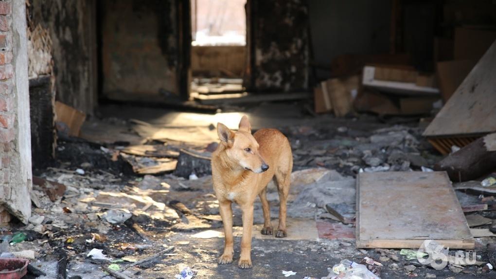 В сарае помощницы депутата нашли трупы собак. Ее обвиняют в организации «концлагеря для животных»