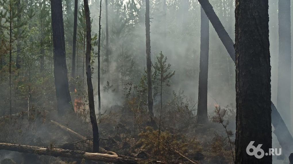 После лесных пожаров в Свердловской области завели четыре уголовных дела