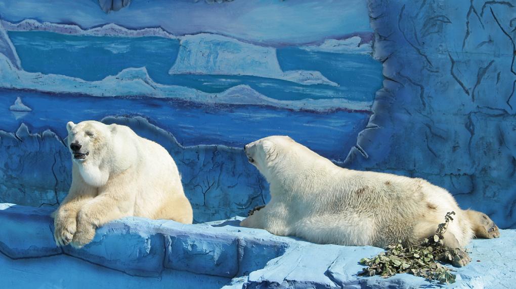 Как животные Екатеринбургского зоопарка переживают жару. Фото, видео