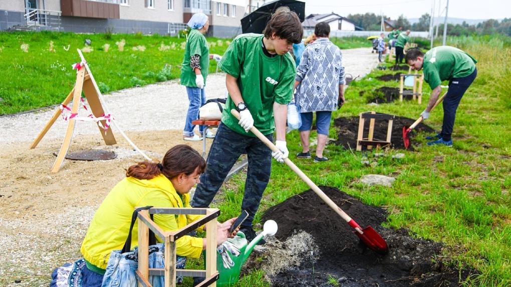 Экоэксперимент в «Мичуринском». Екатеринбуржцы посадили кедровые сосны в саморазлагающихся пакетах