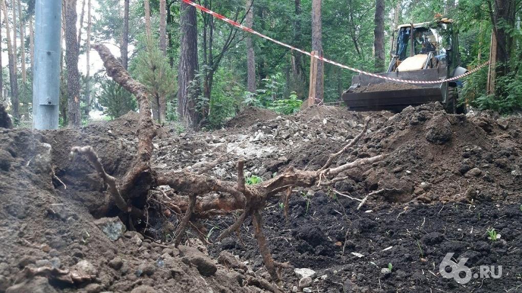 Прокуратура не нашла нарушений в реконструкции Зеленой рощи, где подрядчик перерубил корни деревьев