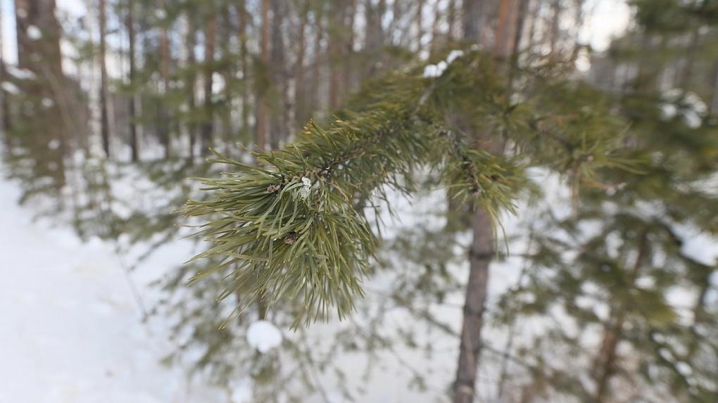 Шесть полезных способов избавиться от елки, если она вам уже надоела