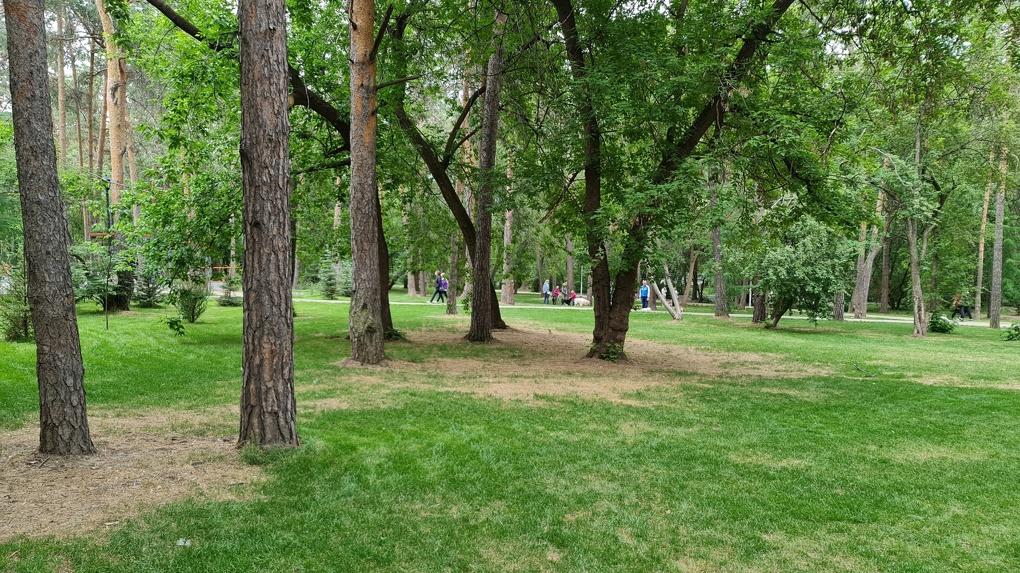 Власти Екатеринбурга решили привлечь к реконструкции парков ландшафтных дизайнеров. Но есть проблема