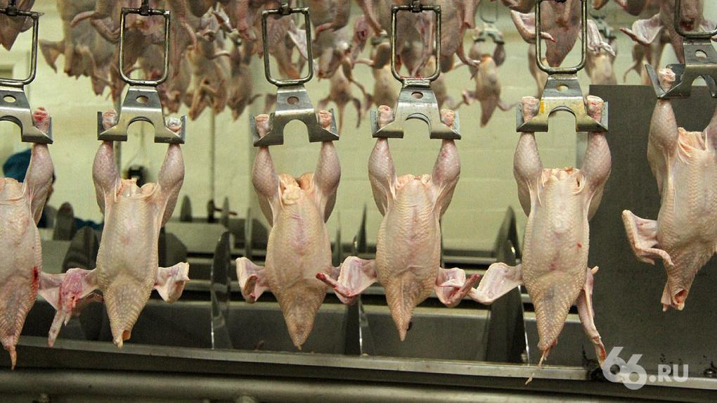 Среднеуральская птицефабрика уволит 25% сотрудников и остановит производство