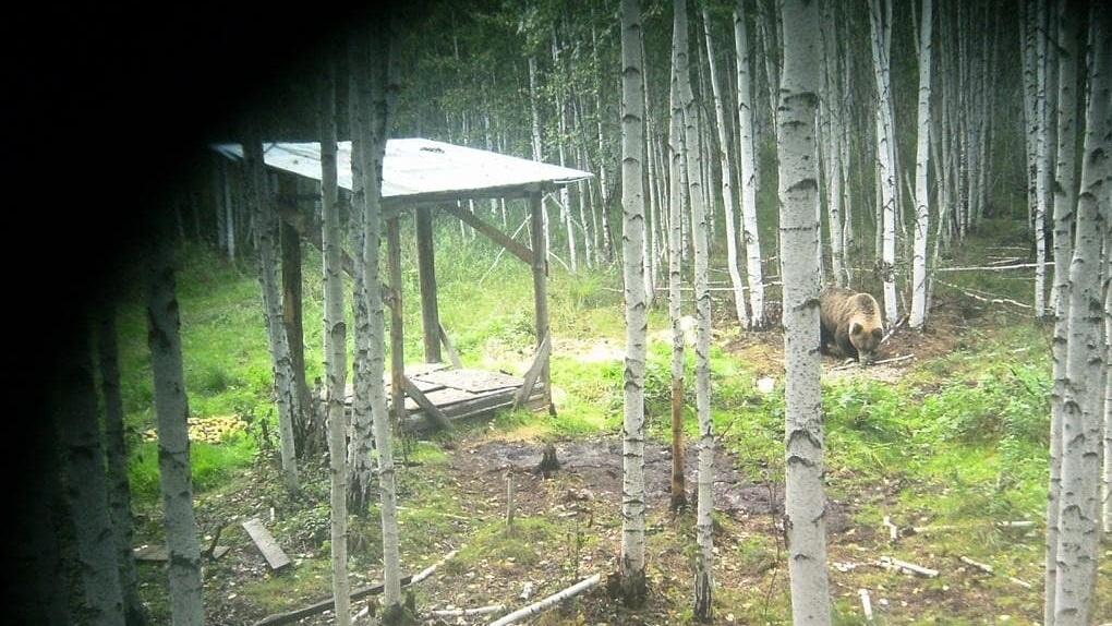 «Как теперь за грибами ходить?» В лесу под Березовским заметили медведя