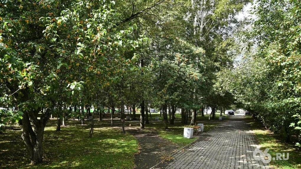 «Это будет английский пейзажный парк»: директор дендрария рассказала про его реконструкцию