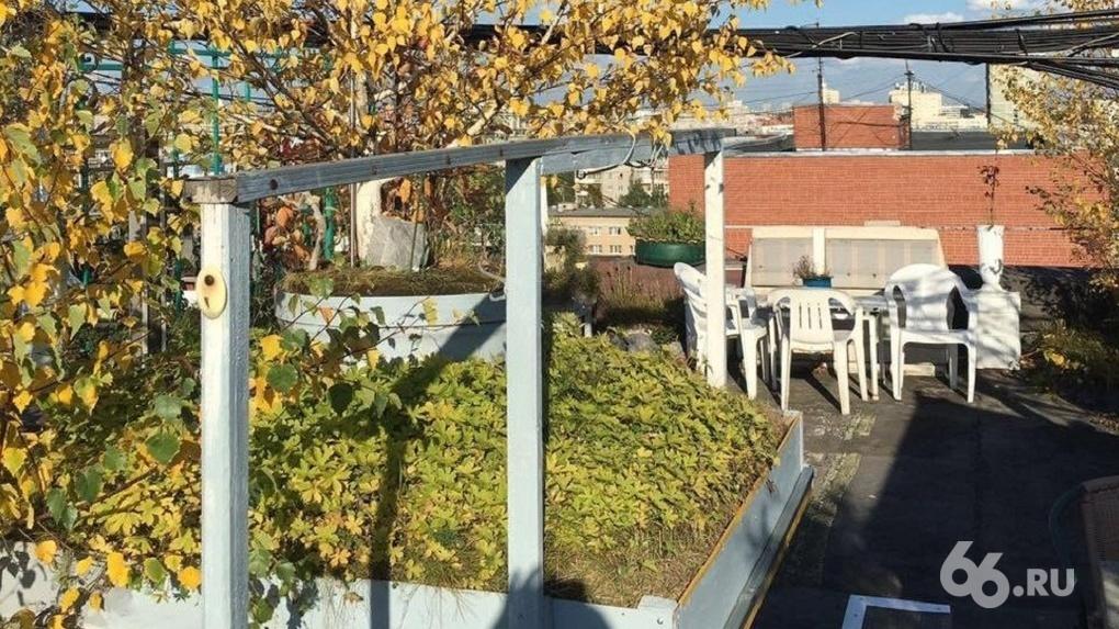 В Екатеринбурге начнут озеленять крыши