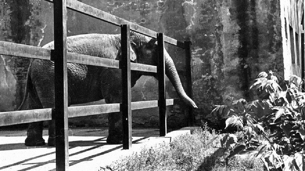 Екатеринбургский зоопарк 70 лет пытаются вывезти из центра. Почему это до сих пор не получилось