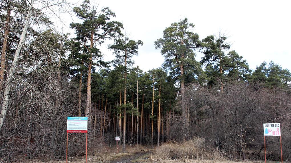 В парке РТИ обещают вырубить сосны и построить ледовый дворец. Кому это выгодно?