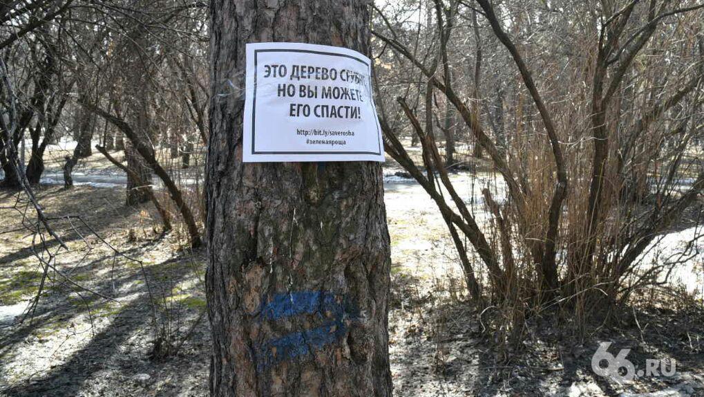 Чтобы что-то построить, надо что-то срубить. Когда и почему начался геноцид деревьев в Екатеринбурге