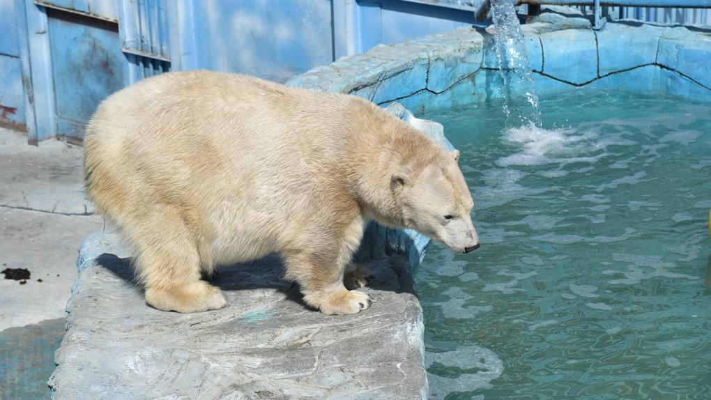Для второй очереди зоопарка в Екатеринбурге нет подходящего участка. Даже в Новокольцовском