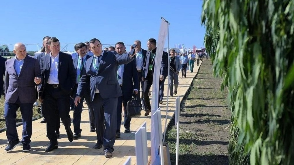 В Свердловской области начнут выращивать коноплю ради пополнения бюджета