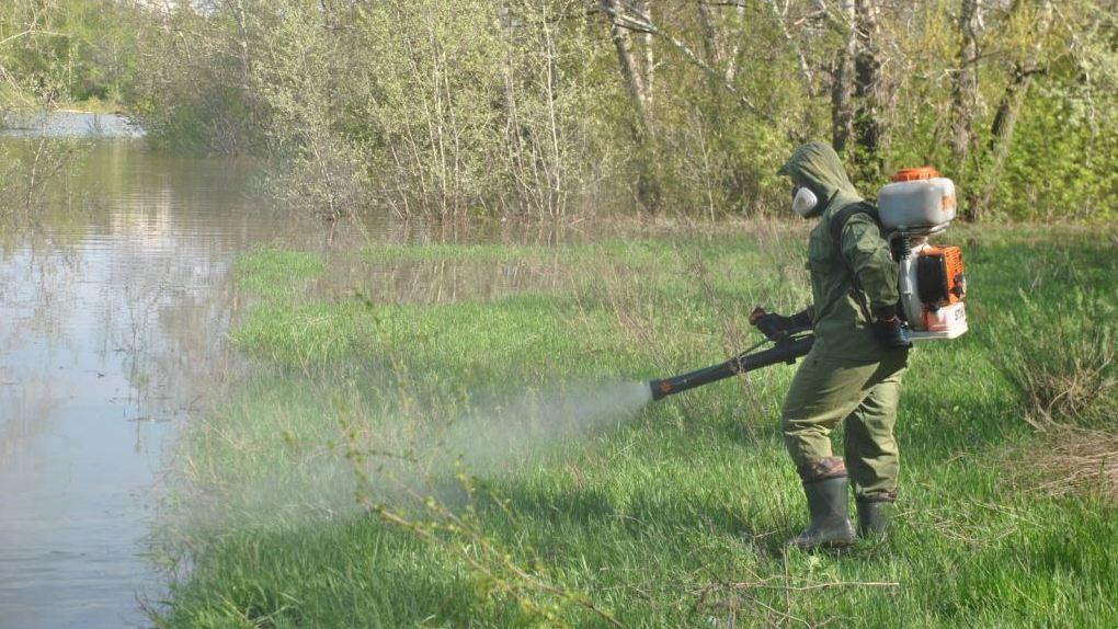 Екатеринбург избавят от комаров перед приездом иностранных болельщиков