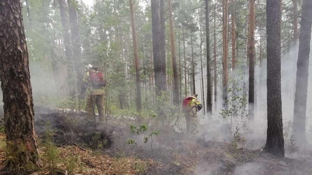Под Екатеринбургом горит лес. Огонь подобрался к жилым домам