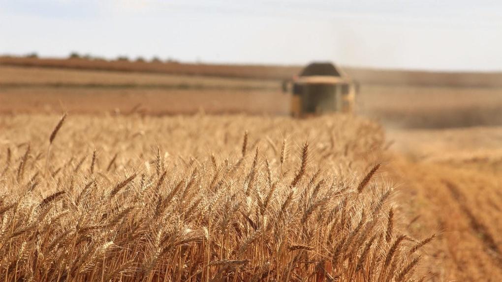 Россельхозбанк разработал «торговую карту мира» для развития экспорта продукции АПК