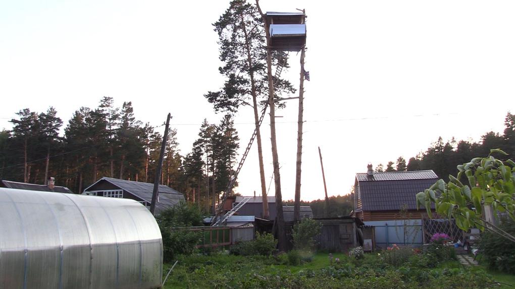 Пенсионер захватил сосны на участке соседей и построил на их верхушках себе дом