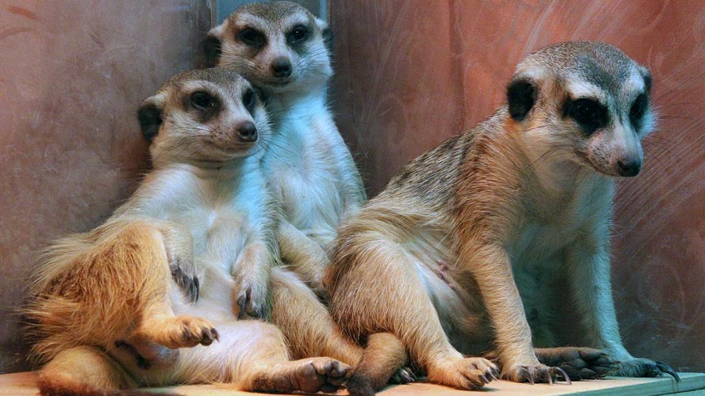 В контактных зоопарках заканчивается корм из-за затянувшегося карантина