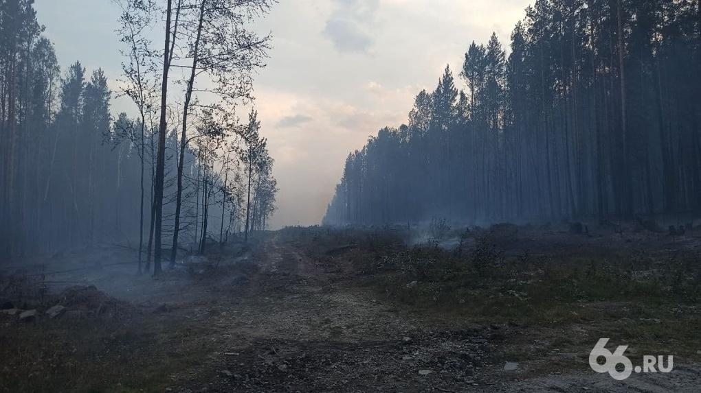 В Свердловской области пошел дождь. Но он не спасет регион от пожаров