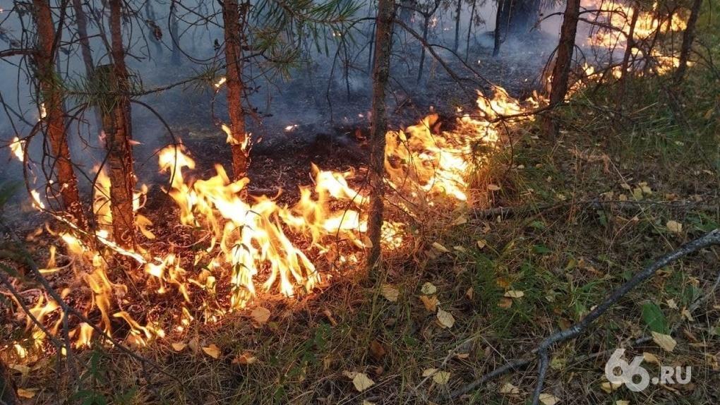 Свердловская область обогнала по числу лесных пожаров даже Якутию