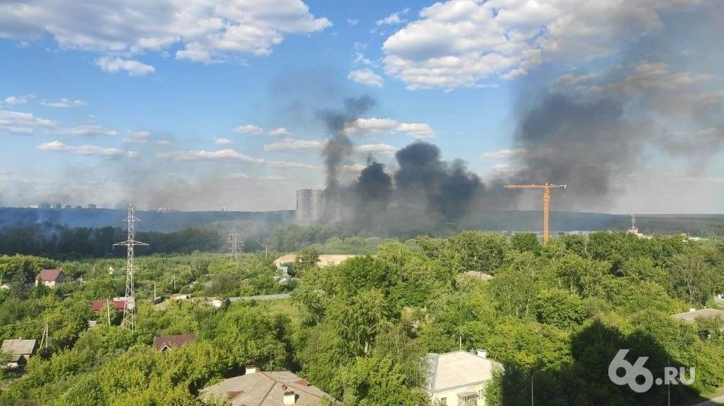 В Екатеринбурге из-за поджога тополиного пуха загорелся парк Маяковского