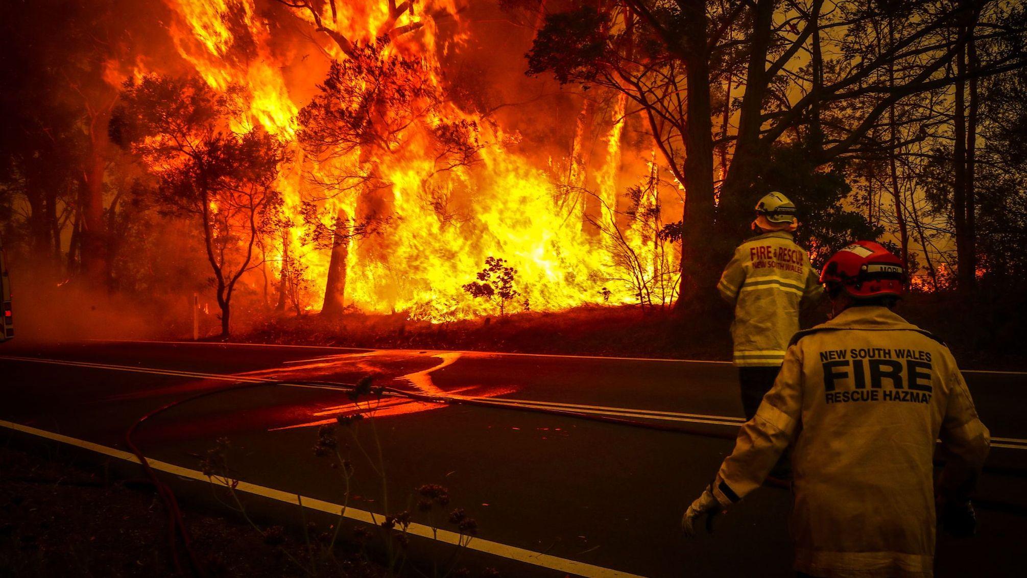 «Люди шьют сумки для коал и кенгурят»: рассказ нашего человека из Австралии, охваченной лесными пожарами